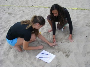 Students helping Sea Turtles during nesting season