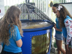 Reefdogs studying an aquaculture facility at the FAU Harbor Branch Oceanographic Institute.